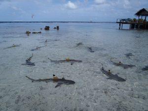 Fische im Wasser mit Tauchsport Braun